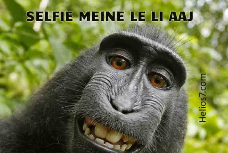 peta selfie monkey